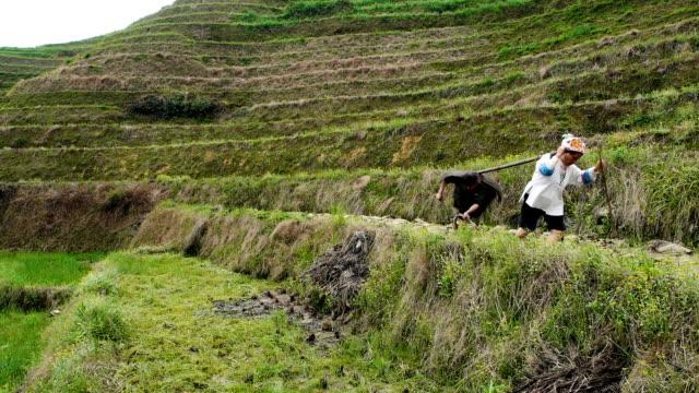 chiński para ploughing ryżu pola - taras ryżowy filmów i materiałów b-roll