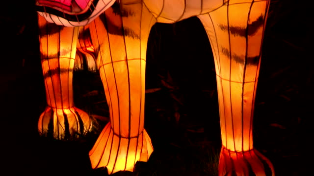 Chinese Lantern Of A Tiger video