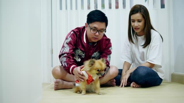 китайский новый год азиатской пары с домашним животным - chinese new year стоковые видео и кадры b-roll