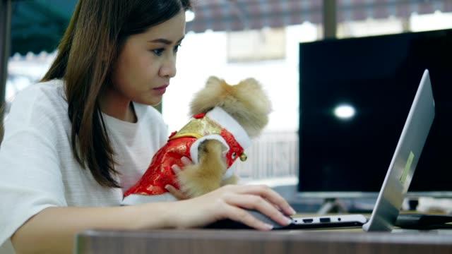 китайский новый год женщины с домашним животным - chinese new year стоковые видео и кадры b-roll