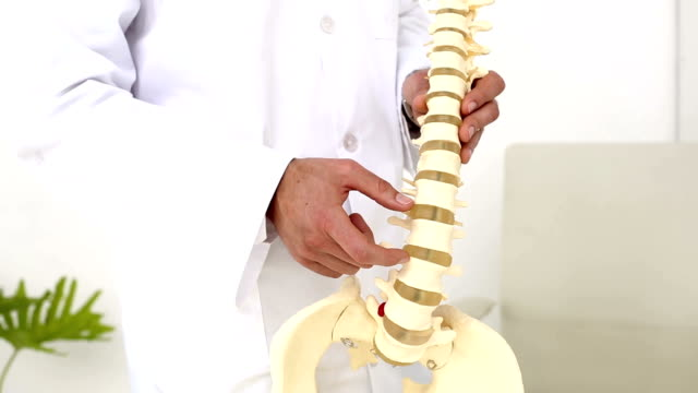 Chiropractor showing spine model to camera video