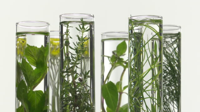 chives, dill, thyme, basil,  curry and mint in test tubes