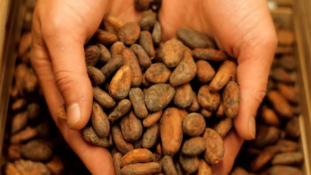 vídeos de stock, filmes e b-roll de feijões do chocolate - chocolate quente