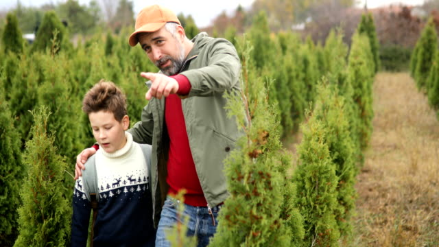 Choosing cristmas tree from u-cut christmas tree farm