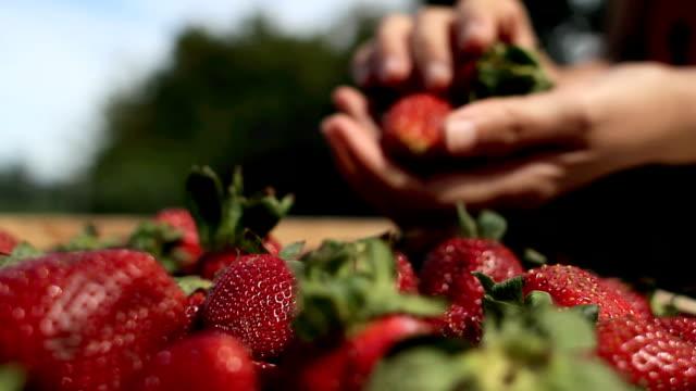 choosing fresh strawberries video