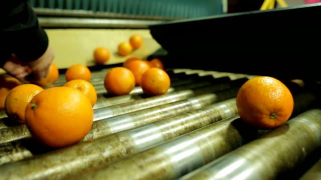 Escolhendo Frutas em インダストリア デ Laranja ビデオ