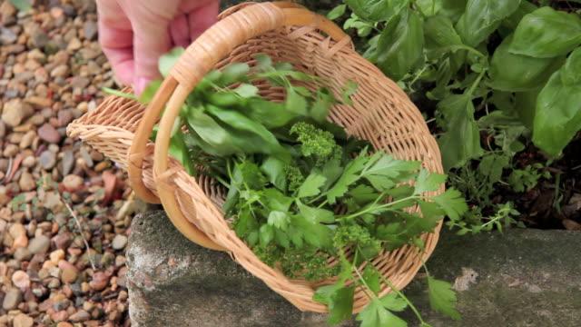 Chopping Herbs video