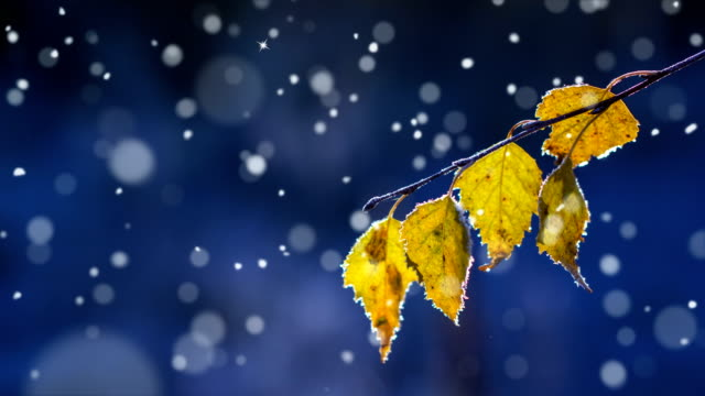 weihnachtskarte (loop 4k) - schnee mit glitzereffekt. - laub winter stock-videos und b-roll-filmmaterial