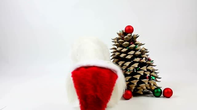 Christmas Dog Play video