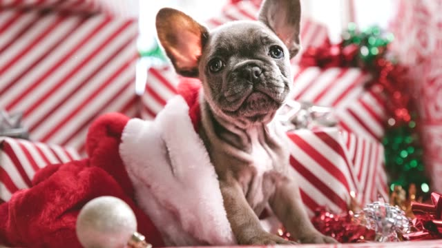 christmas puppy and gifts parallax 4k - christmas background стоковые видео и кадры b-roll