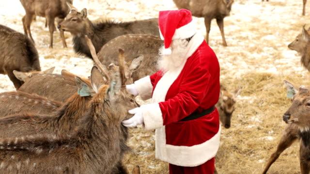 vídeos y material grabado en eventos de stock de navidad tratar - reno mamífero