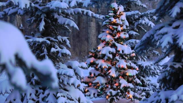 christmas tree glowing in forest - christmas decorations bildbanksvideor och videomaterial från bakom kulisserna