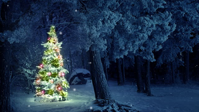 Christmas Tree in Snow video