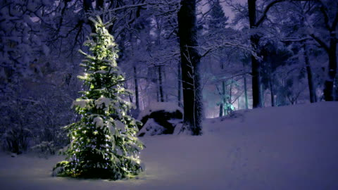 Christmas Tree in Snow Christmas Tree in Snow in Sweden christmas tree stock videos & royalty-free footage