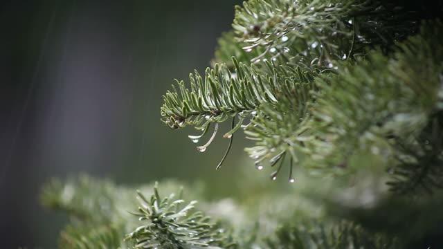 christmas tree in the rain - christmas decorations bildbanksvideor och videomaterial från bakom kulisserna