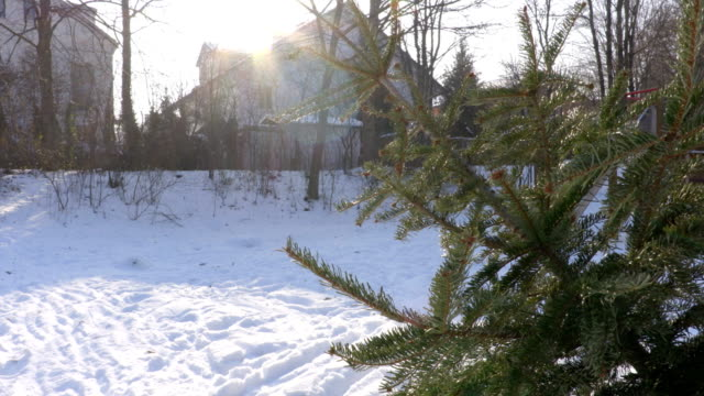 Christmas Tree Outside on Snow video