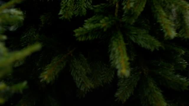 weihnachtsbaum-packen - netzgewebe stock-videos und b-roll-filmmaterial
