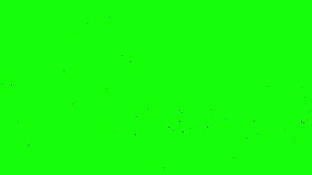 vídeos y material grabado en eventos de stock de chroma pájaros cuervo, fondo de pantalla verde - pájaro