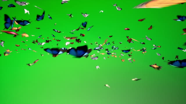 Chroma key too much Butterflies Chroma key to animal pack butterfly insect stock videos & royalty-free footage