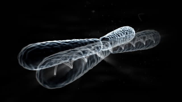 X Chromosome DNA video