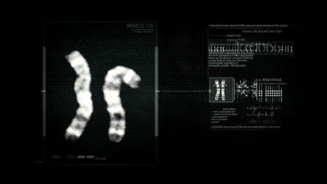 vídeos y material grabado en eventos de stock de cromosoma ciencias de bucle de búsqueda - cromosoma