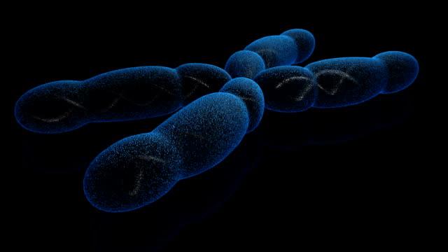 Chromosome X (HD) video