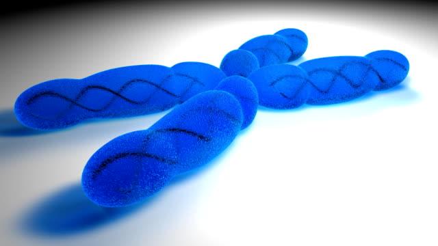 vídeos y material grabado en eventos de stock de cromosoma x (hd - cromosoma