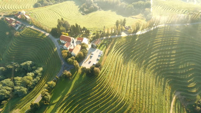 AERIAL Church On Top Of A Hill HD1080p: AERIAL shot of a church on top of a vineyard hill. Prekmurje. Slovenia. monoculture stock videos & royalty-free footage