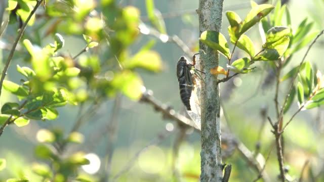 cicada. - summer background стоковые видео и кадры b-roll