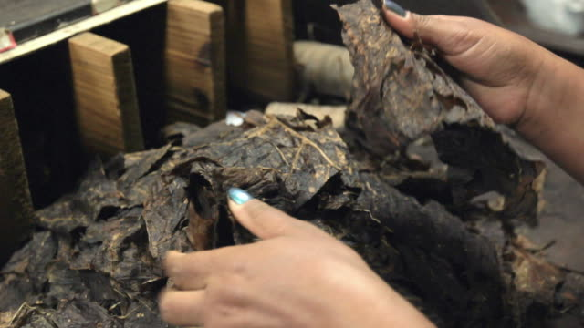 Cigar Production (Handmade) - 02 video