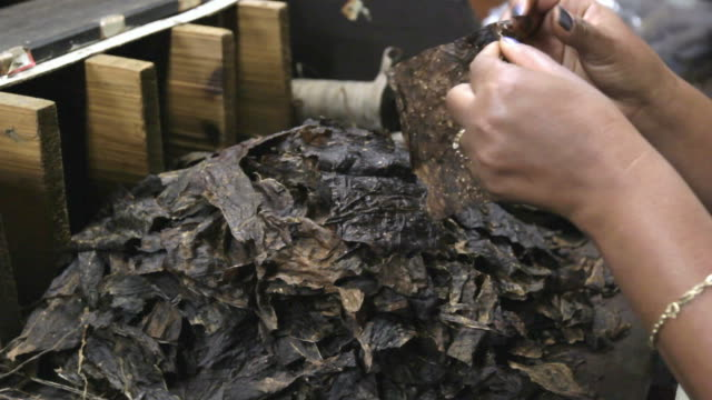 Cigar Production (Handmade) video