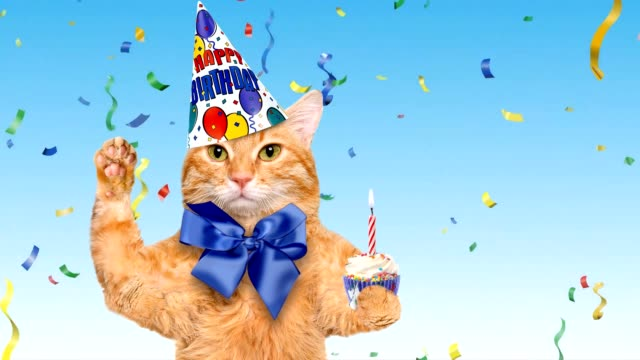 Cinemagraph - Birthday cat .  Animation . Cinemagraph - Birthday cat .  Animation . happy birthday stock videos & royalty-free footage