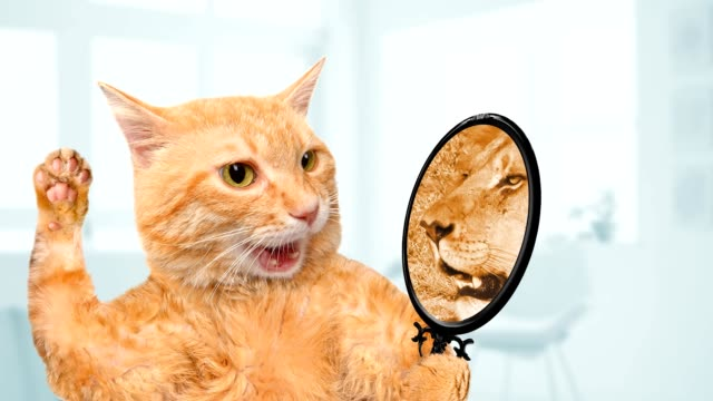 Cinemagraph - Cat looking into the mirror and seeing of a lion. Motion Photo video