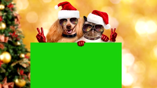 cinemagraph - firework reflected in dog's sunglasses and cat's sunglasses. - christmas background стоковые видео и кадры b-roll