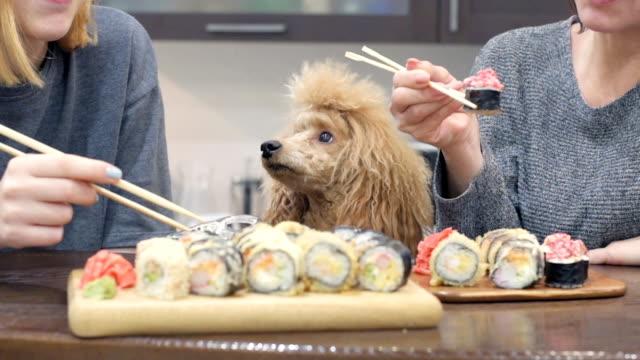 vídeos y material grabado en eventos de stock de cinemagraph - rollos de womun joven feliz comiendo sushi en casa. - sushi