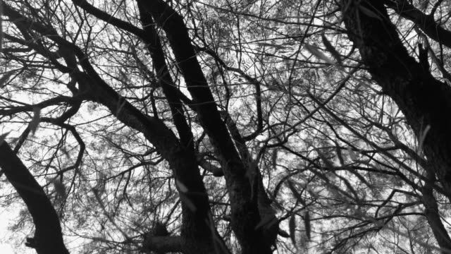 Cinematic black and white branches and trees