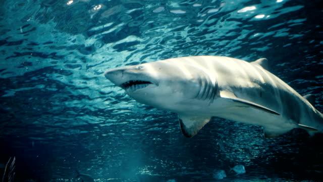 filmiska porträtt av en bortgången haj - 4 kilometer bildbanksvideor och videomaterial från bakom kulisserna