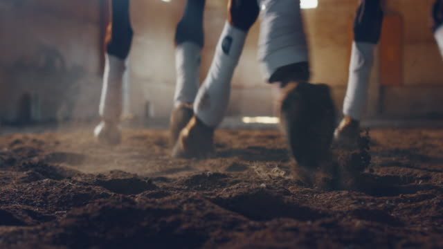 cinematic slow motion close up of two bay horse legs during exercises for competition of horse racing and dressage on a riding hall - imbracatura video stock e b–roll