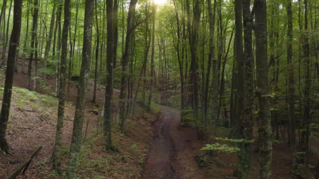 Cinematic video of dirt road through idyllic beech forest Cinematic video of dirt road through idyllic beech forest. footpath stock videos & royalty-free footage