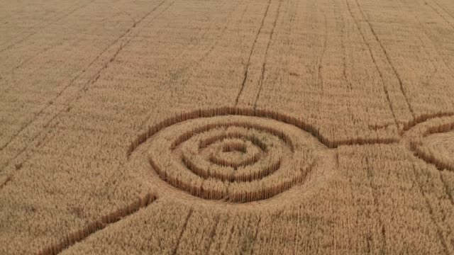 UFO circles on grain crop yellow field, aerial view from drone video