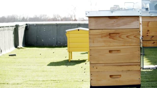 alveare cittadino - apicoltura video stock e b–roll