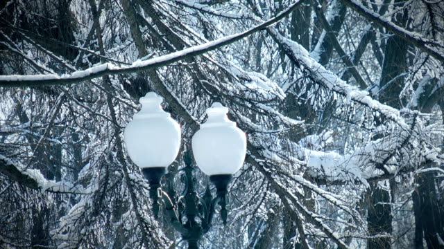 City lights in winter video