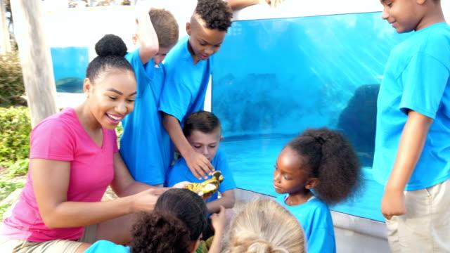 klasse auf exkursion zum marine park, schildkröte-modelle - ferienlager stock-videos und b-roll-filmmaterial