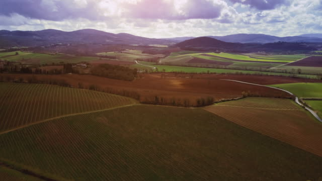 Classic Tuscan view: vineyard from a drone video