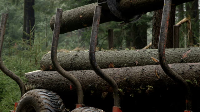 SLOW MOTION: Claw on loader lifting trunks & loading logging truck in the woods video