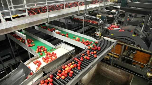 clean and fresh gala apples on a conveyor belt in a fruit packaging warehouse - деятельность стоковые видео и кадры b-roll