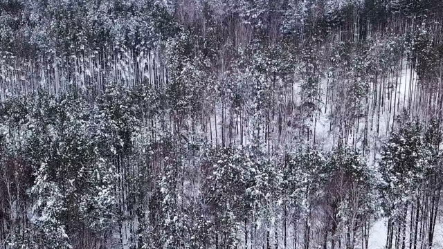 A clean and smooth beautiful snowy winter forest. video