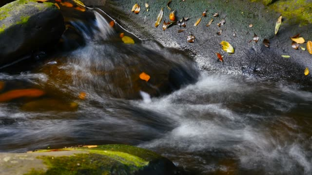 flusso di acqua pulita fresca di montagna sul muschio rocce coperte colori autunnali - cespuglio tropicale video stock e b–roll