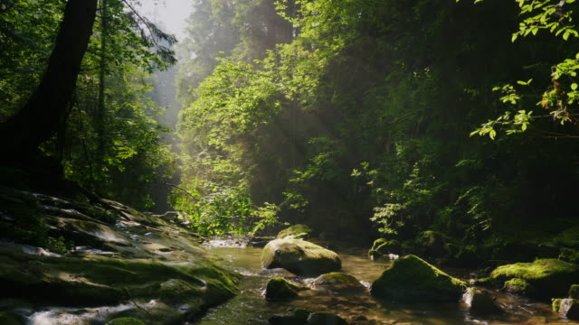 clean mountain stream in the mysterious morning forest. the rays of the sun make their way through the branches of trees. ecology and clean environment - sustainable living stock videos & royalty-free footage
