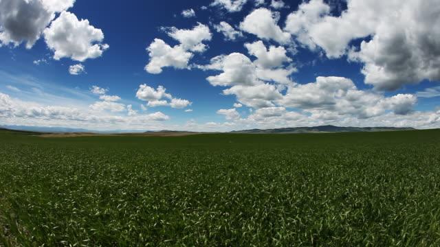 Clean nature vignette. grass field, cloudscape video